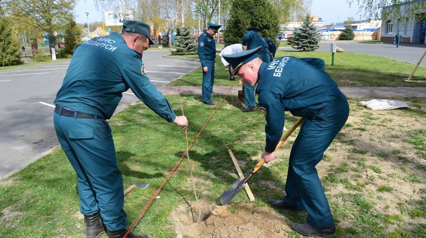 Речицкие спасатели высадили кленовую аллею «Живая память» в честь 75-летия Победы