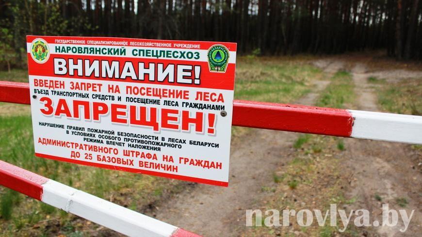 На Наровлянщине запрещено посещать лес