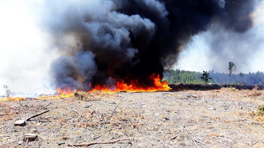 На территории Кировского сельсовета горел лес