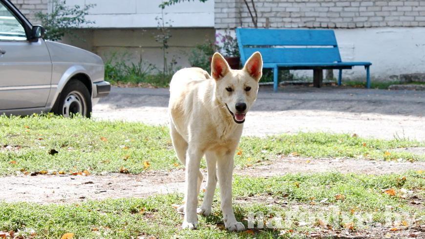 Безрассудное убийство пса в Наровле