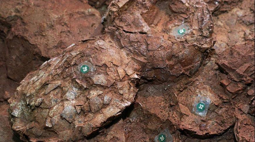 Японские палеонтологи нашли самое маленькое яйцо динозавра
