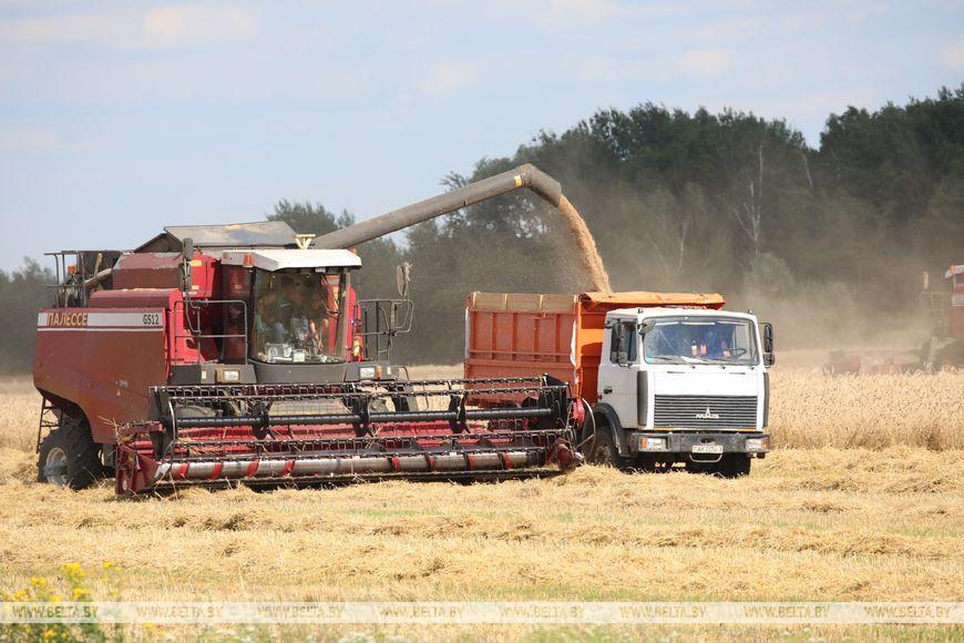 Три района Гомельской области приступили к уборке озимых зерновых культур