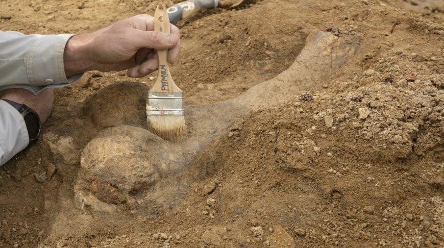 На юге Китая обнаружили останки четырех видов динозавров