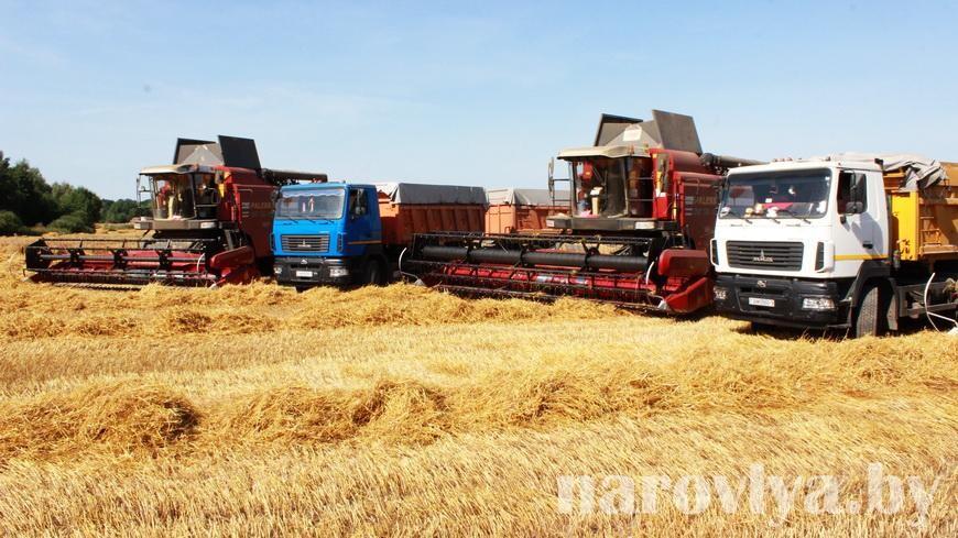 Видео. Аграриев совхоз-комбината «Заря» награждали прямо на поле