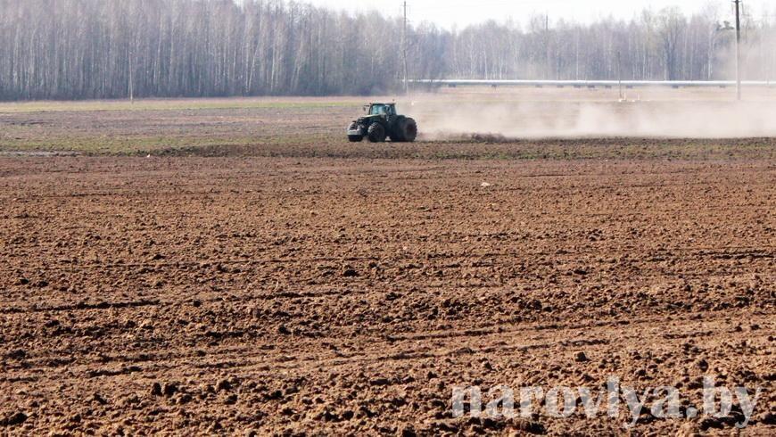 Пять районов Гомельской области завершили сев озимого рапса