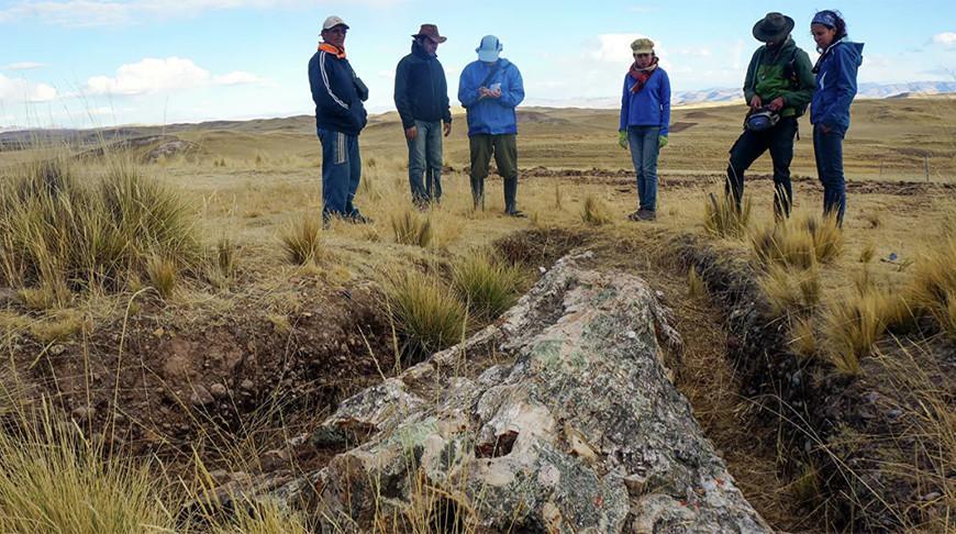В Перу нашли гигантское дерево