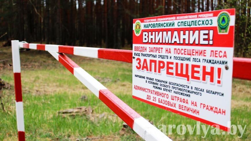 На Наровлянщине введен запрет на посещение лесов