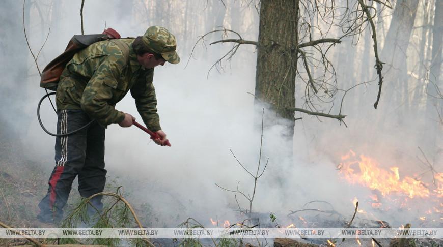 Почти 1 тыс. лесных пожаров произошла в Беларуси с начала года