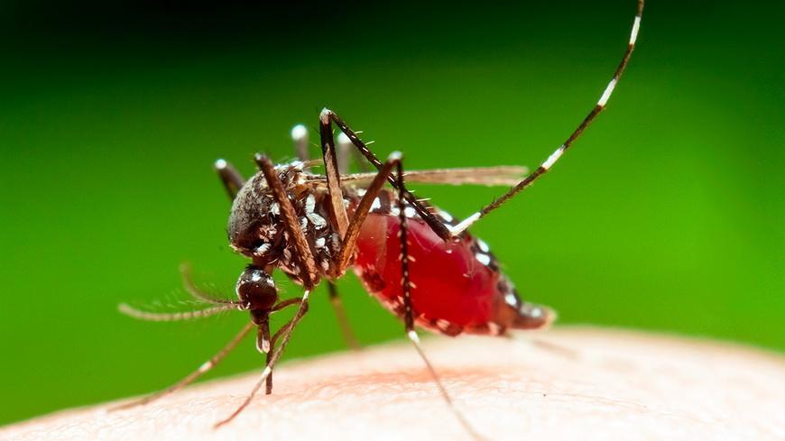 Что нужно знать о малярии