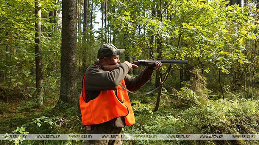 Сезон охоты на лося, оленя и лань открывается в Беларуси