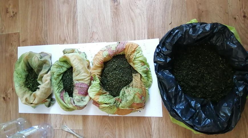 Житель Жлобина хранил в квартире почти полкило марихуаны