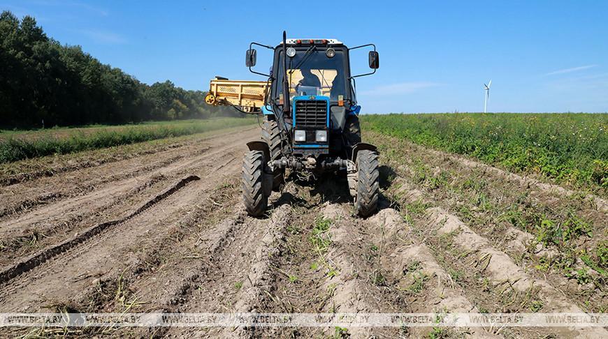 Картофель в Гомельской области убран с 44% площадей
