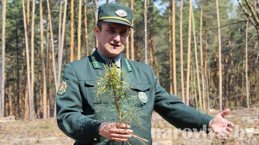 Наровлянский спецлесхоз приглашает принять участие в акции «Чистый лес»