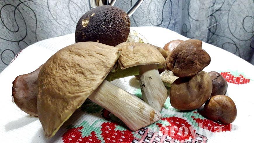 Превышения допустимых уровней радионуклидов в грибах выявлены в октябре в 15 районах Гомельщины