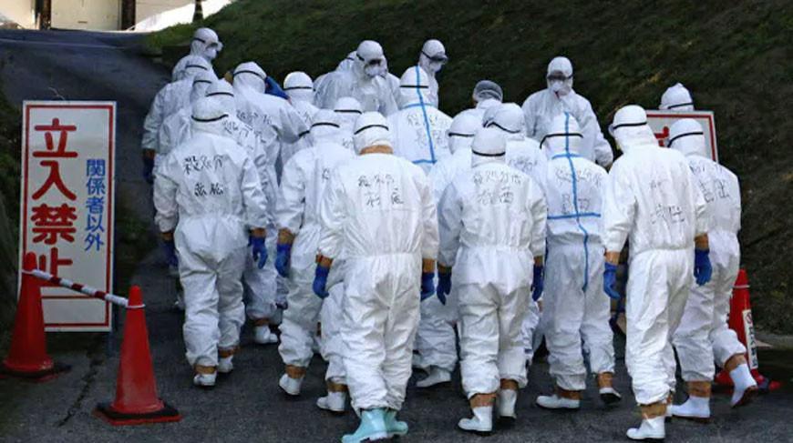 Вспышку птичьего гриппа зафиксировали в Японии