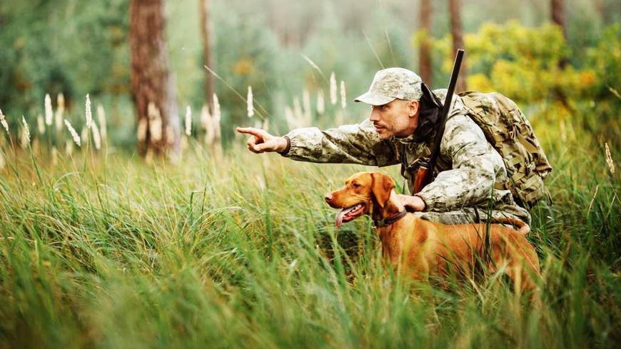 7 ноября открывается охота на пушного зверя