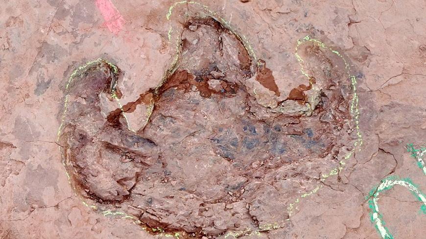 Ученые обнаружили более 240 окаменелых следов динозавров на востоке Китая