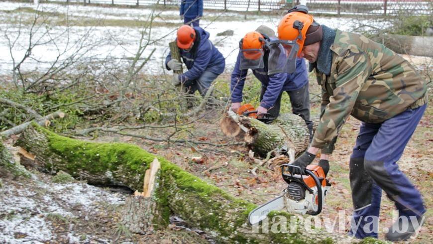 Работники КУП «Жилкомстрой» проводят обрезку сухих и аварийных деревьев в городском парке
