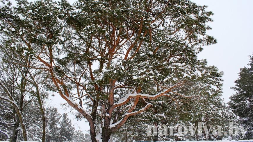 Смоет короеда, наполнит колодцы. Какую выгоду принес снег природе?