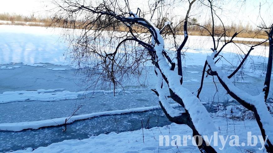 Минприроды просит белорусов помочь в предотвращении заморов рыбы на водоемах