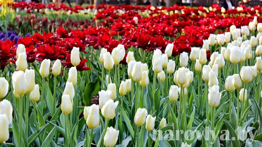 Близится 8 Марта. В налоговой напомнили правила реализации цветов
