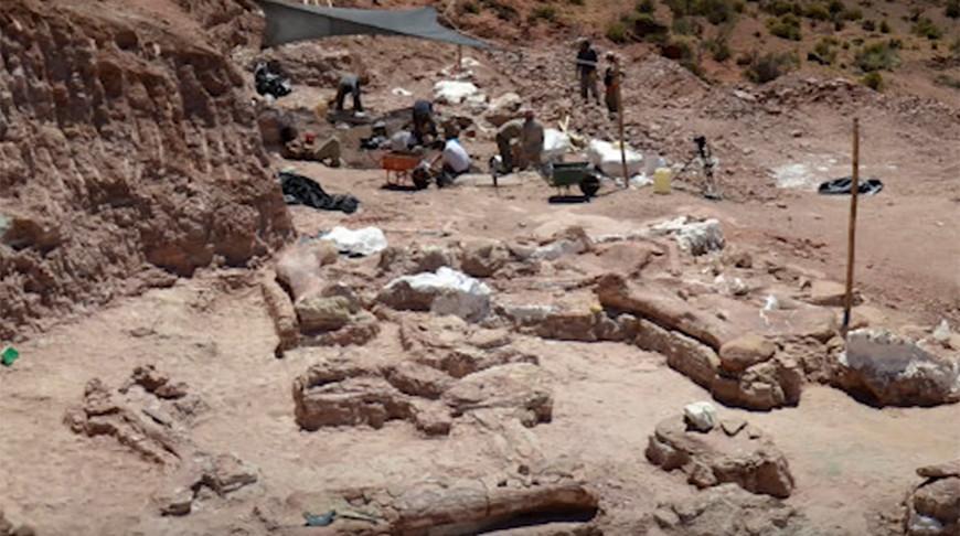 В Аргентине найдены останки огромного динозавра, жившего 140 миллионов лет назад