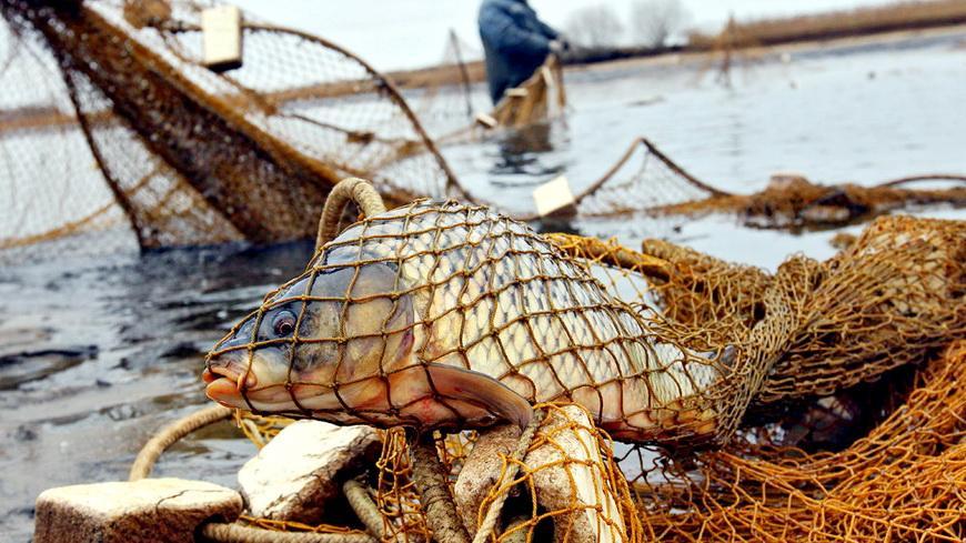 За незаконный улов 2 рыбаков приговорили к 2 годам лишения свободы, крупным штрафам и конфискации авто