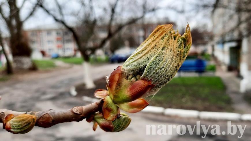 На Наровлянщину пришла весна!