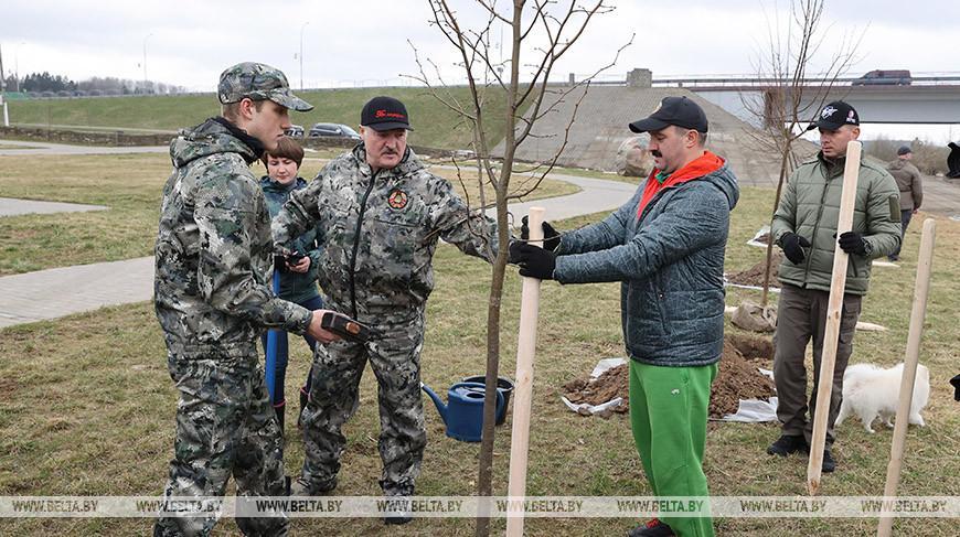 Лукашенко в день субботника высаживал деревья на своей малой родине в Александрии