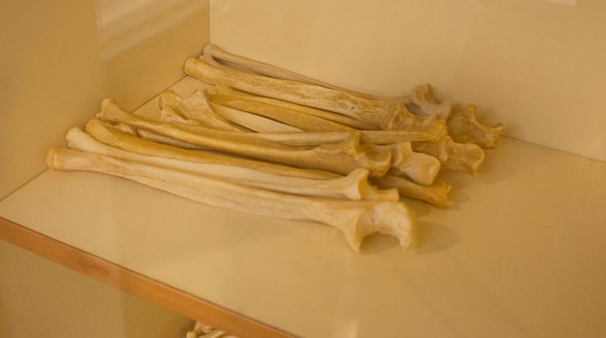 В чилийской пустыне нашли кости неизвестного науке динозавра