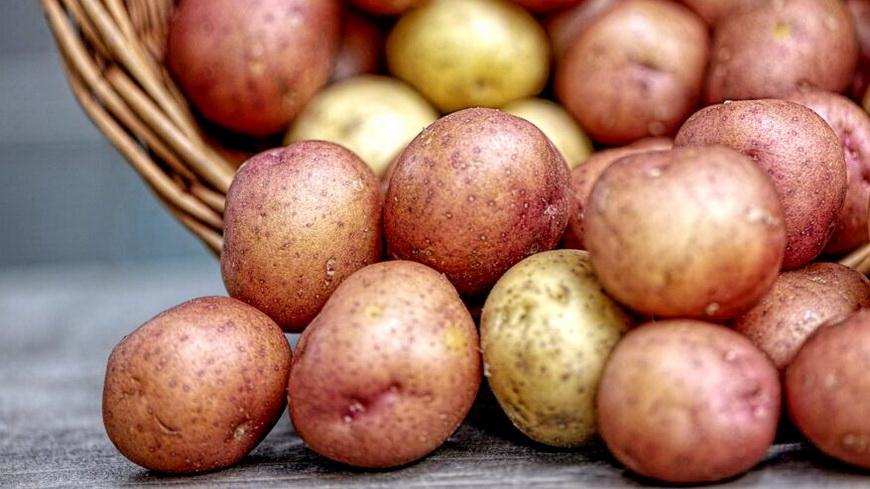 ФПБ: в магазинах снова появился импортный картофель