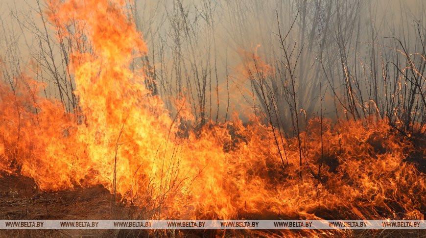 Новиков: суммы возмещения ущерба от пожаров в экосистемах могут намного превышать штрафы