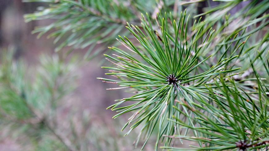 МВД призывает граждан соблюдать меры безопасности при посещении лесов
