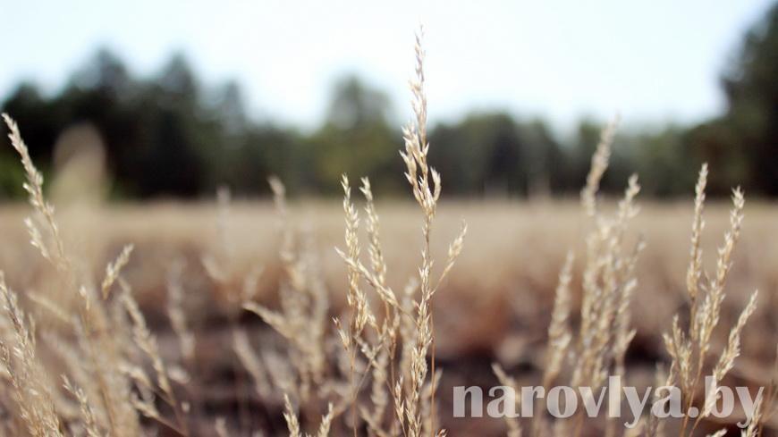Дикая природа в зоне: ученые напишут стратегию развития для заповедника