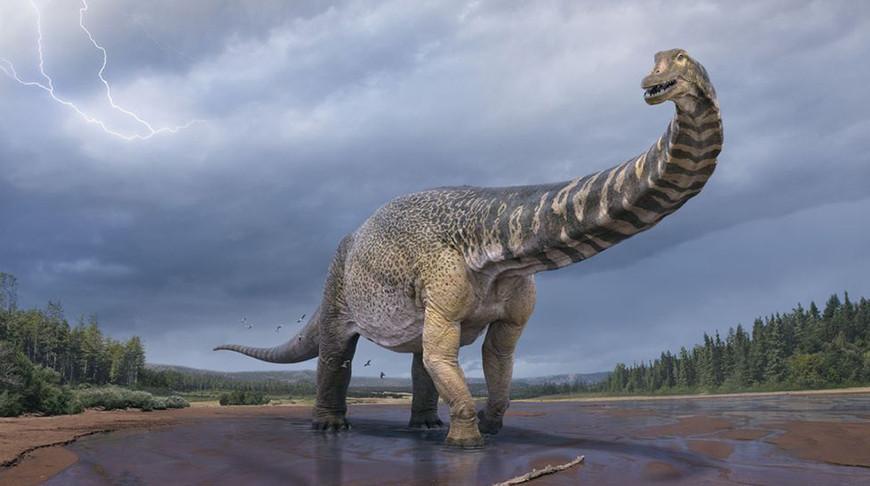 В Австралии обнаружили самый крупный вид динозавров