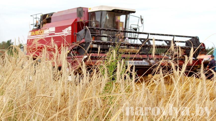 Профсоюзы АПК: самый опытный хлебороб Гомельской области работает на ниве 50 уборочный сезон