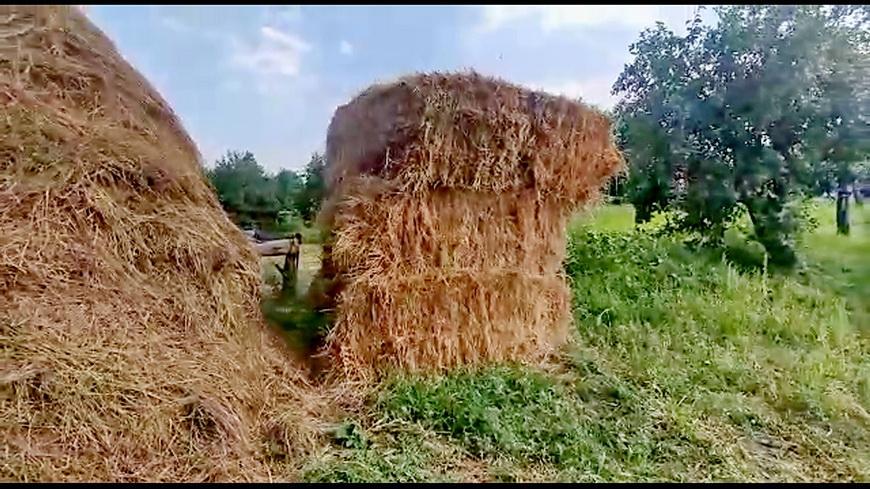 Житель Наровлянского района похитил почти 3 тонны сена