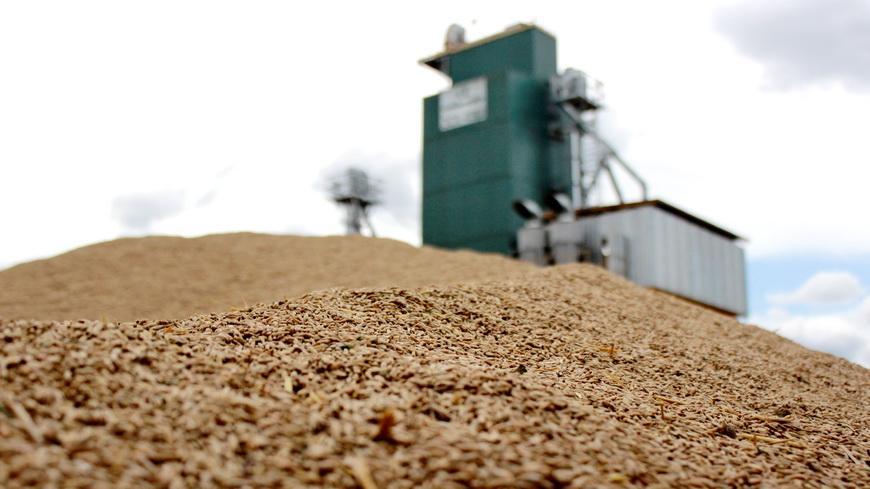 Около 800 школьников Гомельщины работали на зернотоках во время уборочной