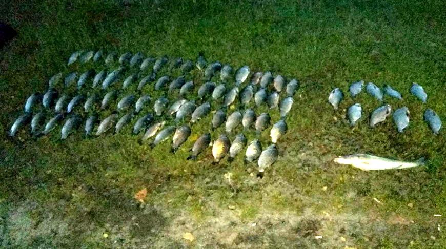 В Житковичском районе двое браконьеров нарыбачили на Br3 тыс.