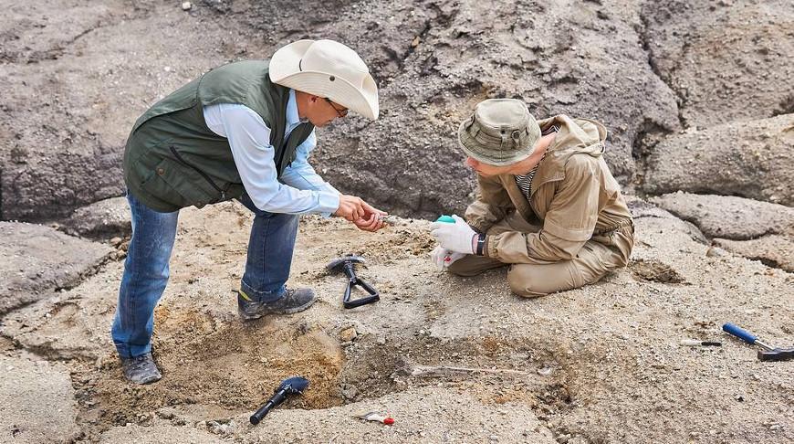 В Новой Зеландии нашли окаменелости гигантского длинноногого пингвина