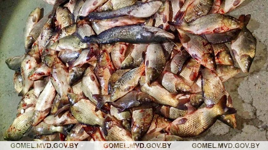 В Житковичском районе местные жители из пруда рыбхоза похитили более 100 кг рыбы